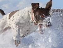 Kyra chasing snow