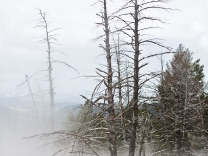 Mammoth Hot Springs - Yellowstone