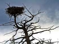 Eagles Nest - West Yellowstone